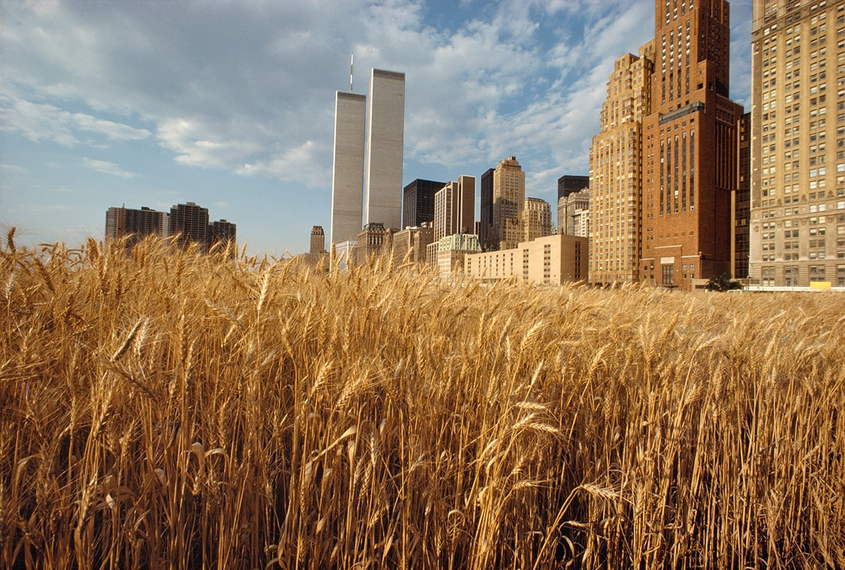 Agnes Denes, Wheatfield – A Confrontation: Battery Park Landfill, Downtown Manhattan – With New York Financial Center, 1982, Courtesy Leslie Tonkonow Artworks + Projects, New York