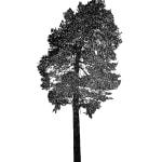 Tree 21