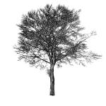 Tree 13