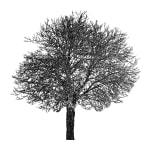 Tree 25