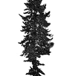 Tree 39