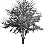 1585819595 Louisiana Shadows 2018 Akryl P Lrred 100 X 100 Cm Kopi