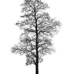 Tree 20