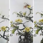 Still Life 014 - Yellow Mai Flower 小品之十四 - 黃梅