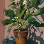 Gerard_Byrne_Pink_Sensation_Winter_Rose_contemporary_impressionism_fine_art_gallery_Dublin_Ireland