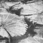 Gerard Byrne, Victoria Water Lilies, 2019