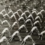 Vernacular Photography, Adolfo Farsari Studio - Album