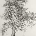 Ian Westacott | tree house pine