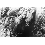 Robert Zhao Renhui, An Eagle Returns, Day 322, 2020