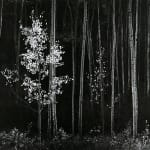 Ansel Adams, Aspens, Northern New Mexico, 1958