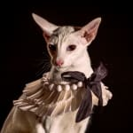 Holly Andres, Fancy Cat 2