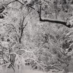 Minor White, Twisted Tree, Point Lobos, CA, 1950