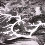 William Garnett, Tehachapi Foothills with Wildflowers, 1950