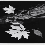 Richard Garrod, Leaves and Log, Coos Bay, Oregon, 1976