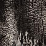 Ansel Adams, Burnt Stump & New Grass, Sierra Nevada, CA, 1935