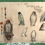 Jane Rosen, Barred Owl, 2020