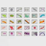 Renato Pera, 80 desenhos (bactérias), 2019