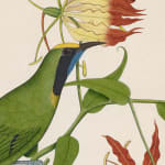 A bird, likely the Golden-fronted leafbird, perched on a branch of Gloriosa Sperba Linn, Company School, perhaps by a Chinese...