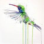 Dave White, Hummingbird VI