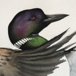 Karl Martens, Common Loon (Unframed) (Hungerford Gallery)
