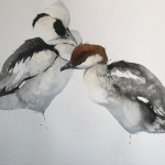 Karl Martens, Smew Male and Female (Unframed) (Hungerford Gallery)