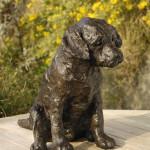 Rosemary Cook, Curiosity (Labrador puppy)