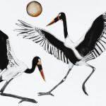 Beatrice Forshall, Saddle Billed Storks