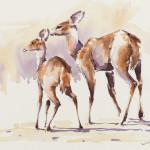 Julia Cassels, Bushbuck (Hungerford Gallery)