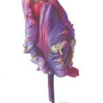 Fiona Strickland, Rococo Bud (Tulipa 'Rococo')