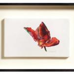 Fiona Strickland, Bud (Tulipa 'Blumex Parrot')