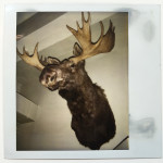 Andy Warhol - unique polaroid of a Moose on the wall. Provenance Fred Hughes