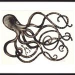Caroline Cleave, Octopus