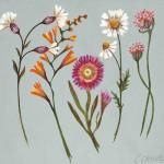 Caroline Cleave, Cornish Garden Flowers