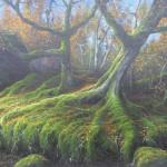 Gerald Dewsbury, Flat Slab Trees