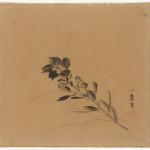 Malerei, #007487 Chinesische Glockenblume, Japan, Edo-Zeit (1600-1868), 18. Jh.