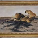 Wilhelm Kuhnert, Lions