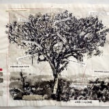 An image containing a drawing of a tree by William Kentridge.