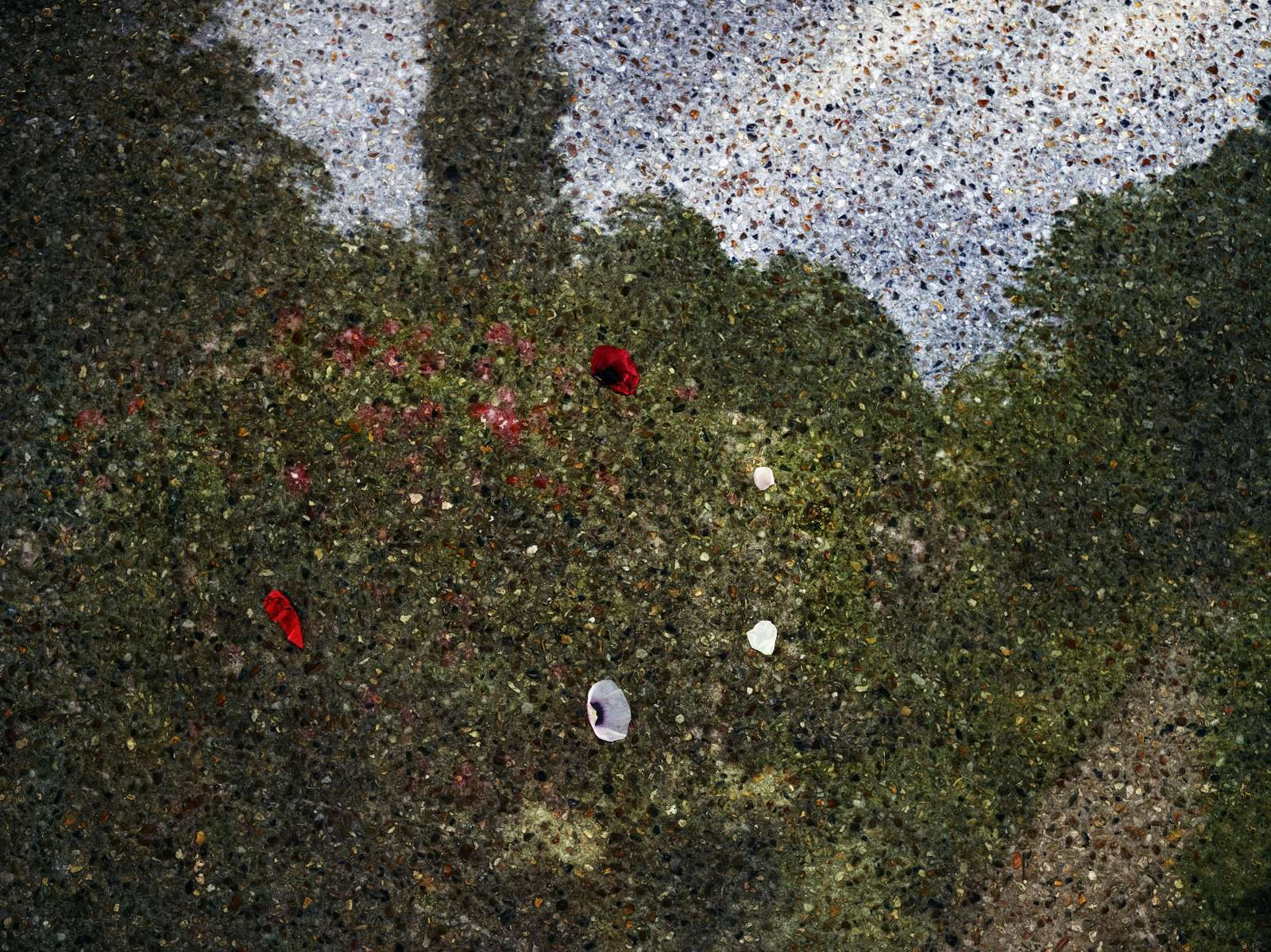 Abelardo Morell After Monet