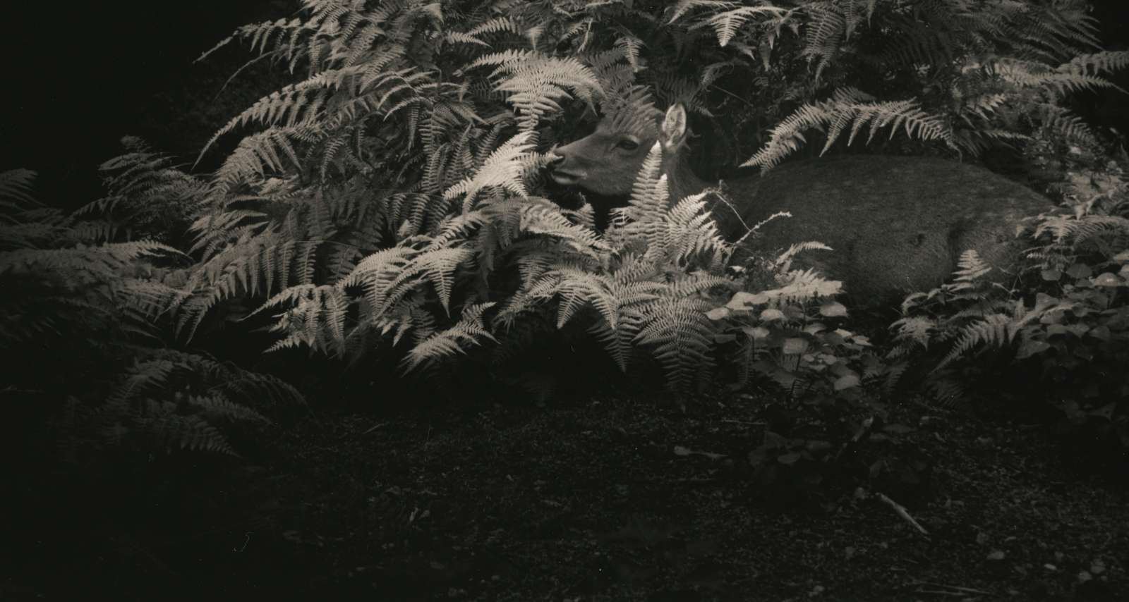 Masao Yamamoto Kawa=Flow