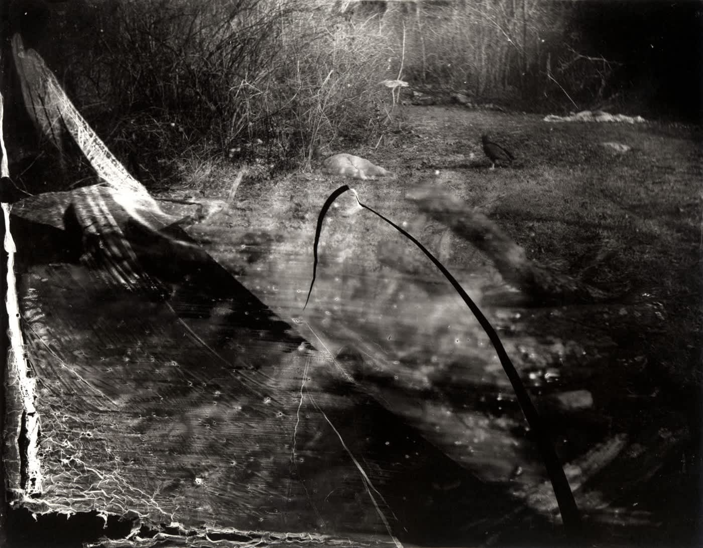Sally Mann Selections from What Remains
