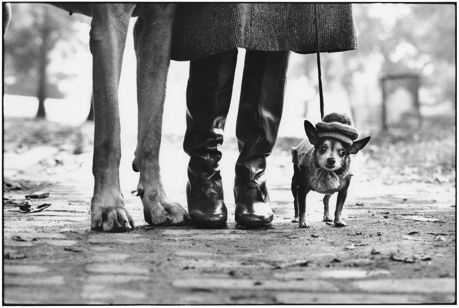 Elliott Erwitt New York, Paris & Rome