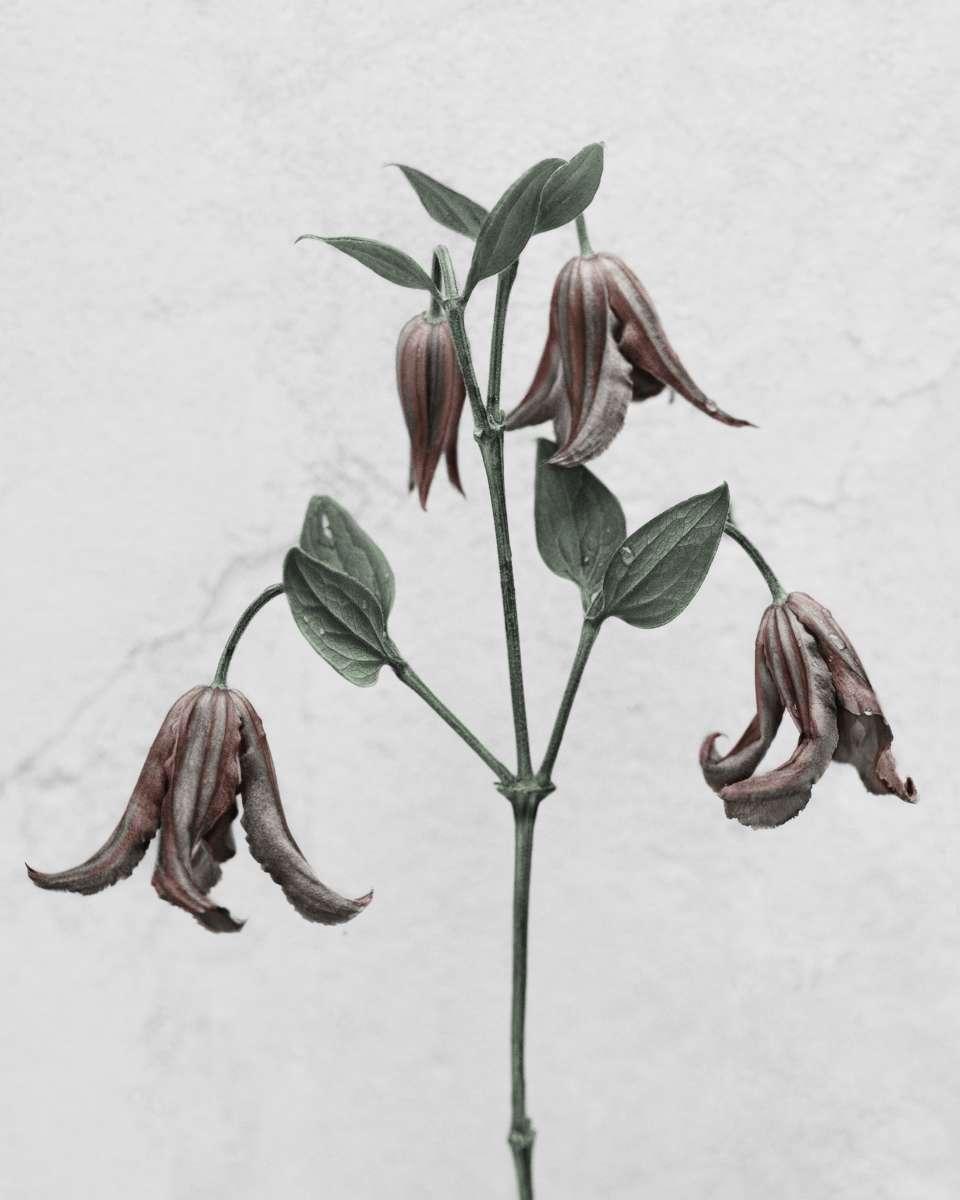 Artistic Eerie Garden: Interview with Vee Speers The Green Gallery: #5 Golden Issue