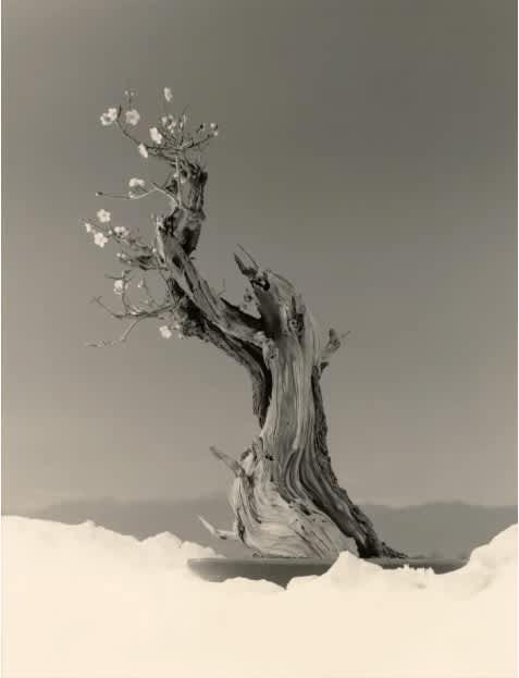 PDN PHOTO OF THE DAY Yamamoto Masao