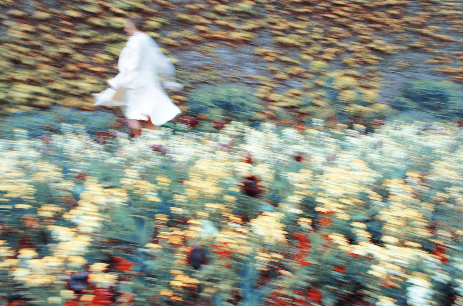 Erik Madigan Heck, The Garden