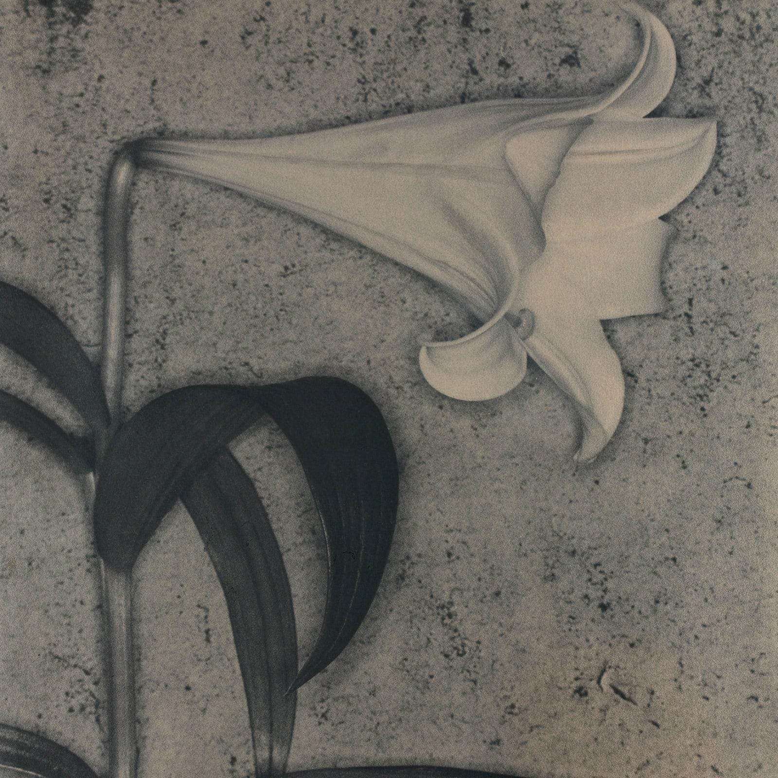"John Stewart  Ursula, 2004  Original vintage, Fresson charcoal print  Signed ""John Stewart""  55 x 45 cm  Edition 7 of 15"