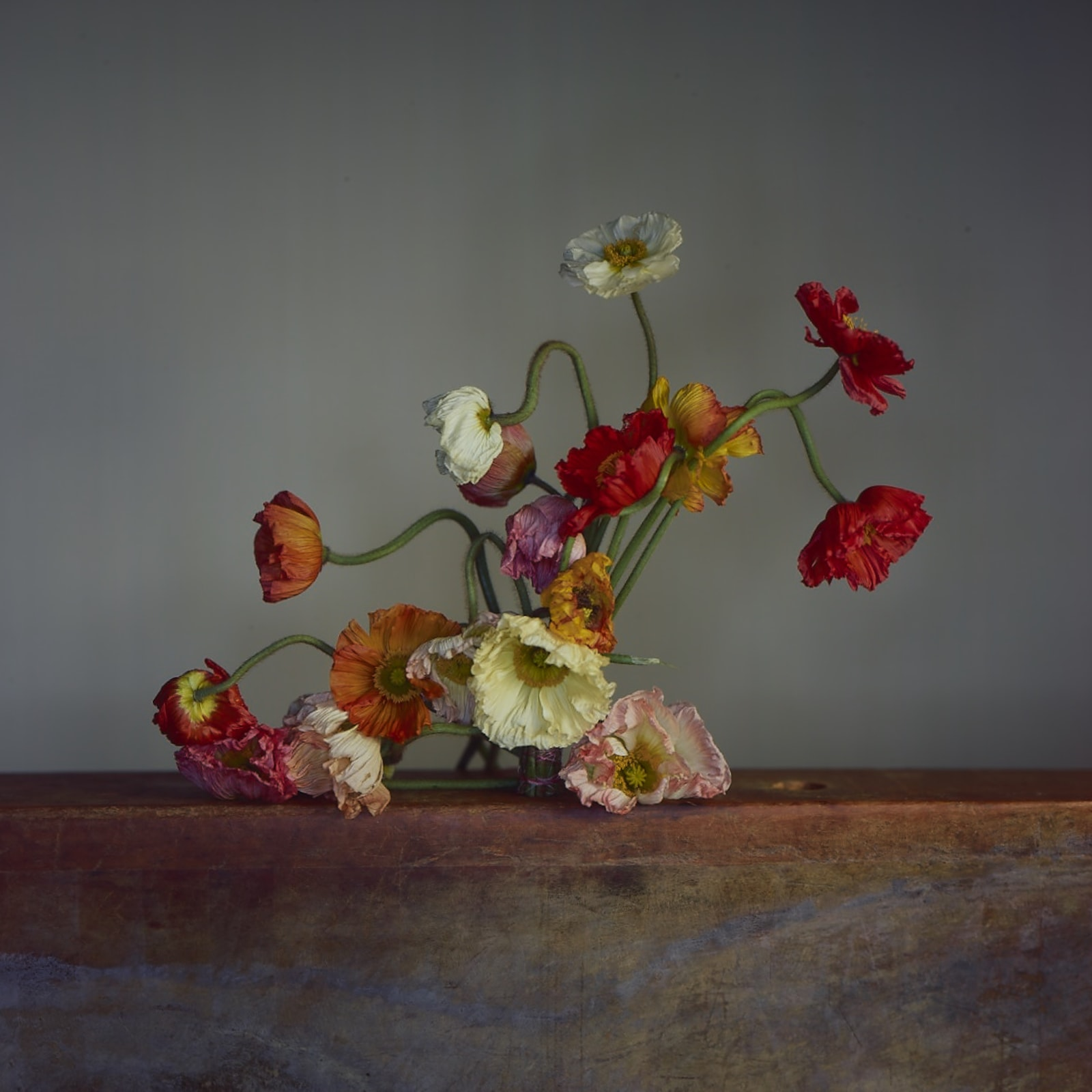 Richard Learoyd  Large Poppies, 2019  Unique Ilfochrome photograph  89.5 x 102 cm