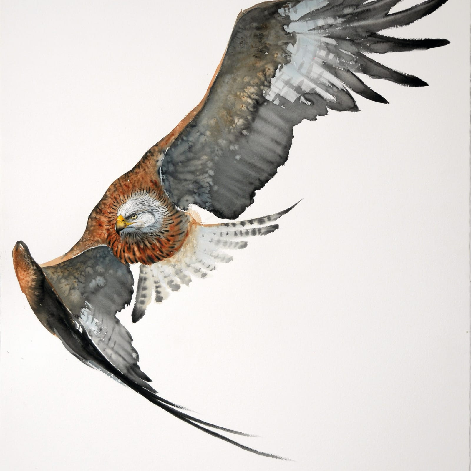 Karl Martens  RED KITE IN FLIGHT (UNFRAMED)  Watercolour  153 x 103 cm  60 1/4 x 40 1/2 in