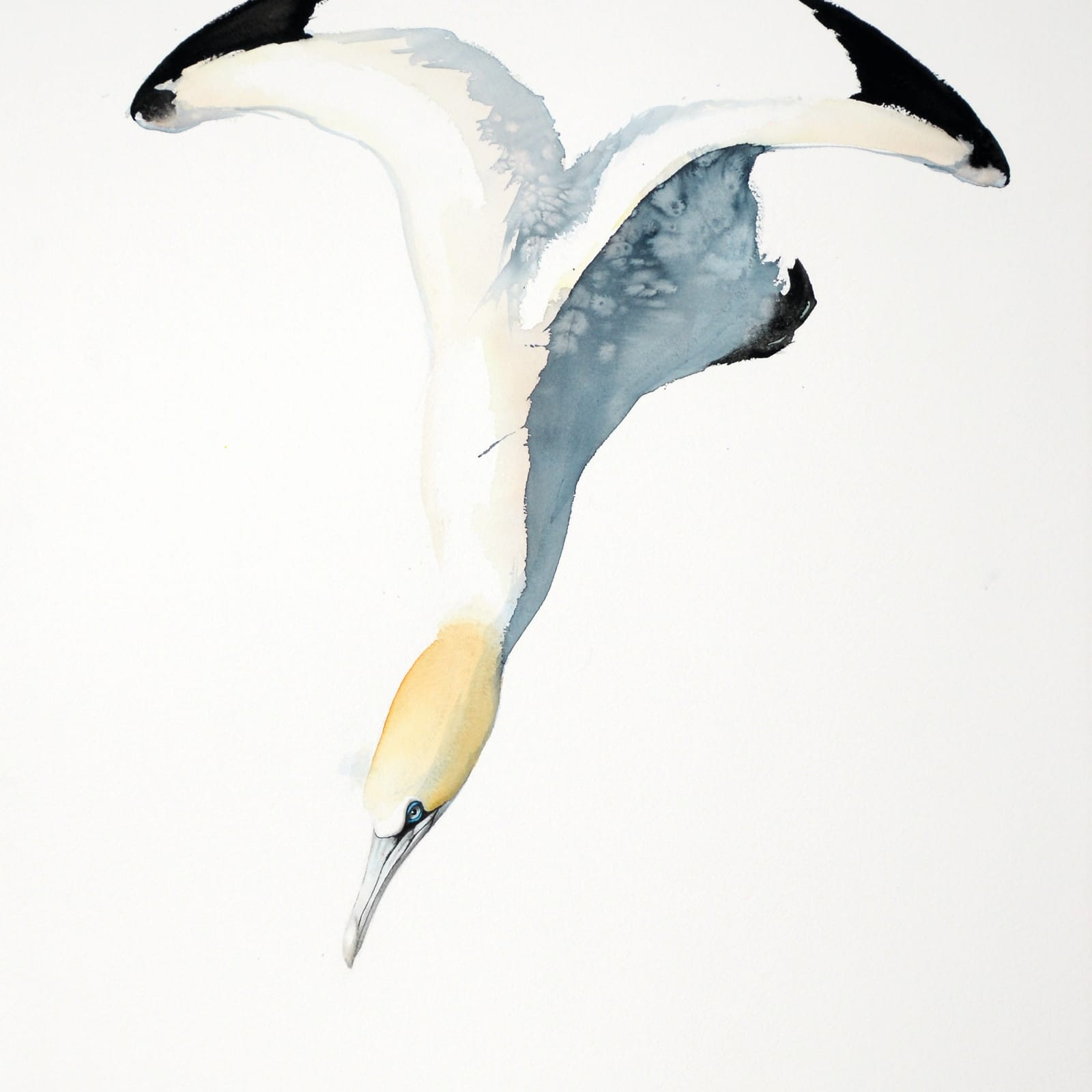 Karl Martens  GANNET 4 (UNFRAMED)  Watercolour  100 x 70 cm  39 3/8 x 27 1/2 in