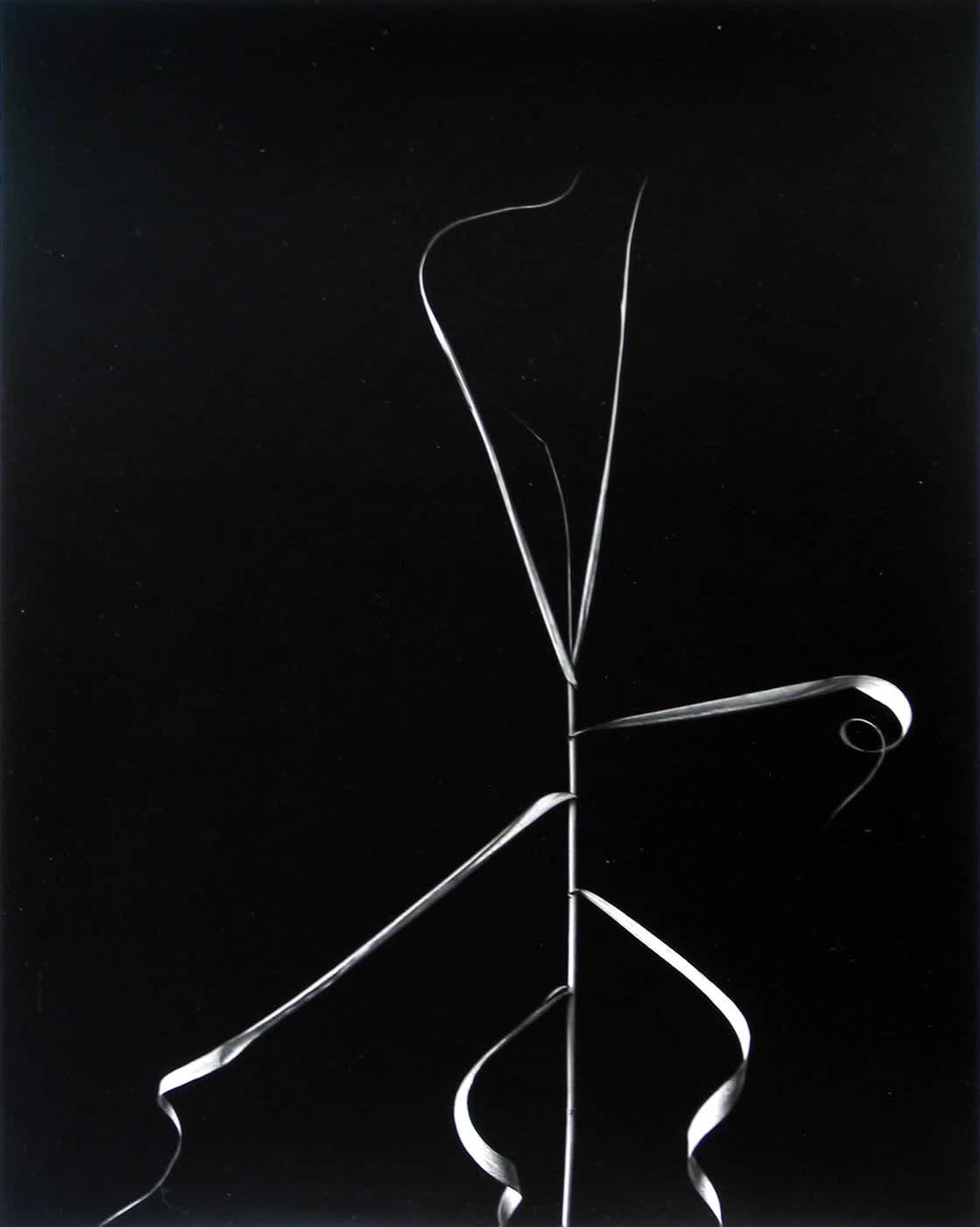 Harry Callahan, Aix-En-Provence, 1958
