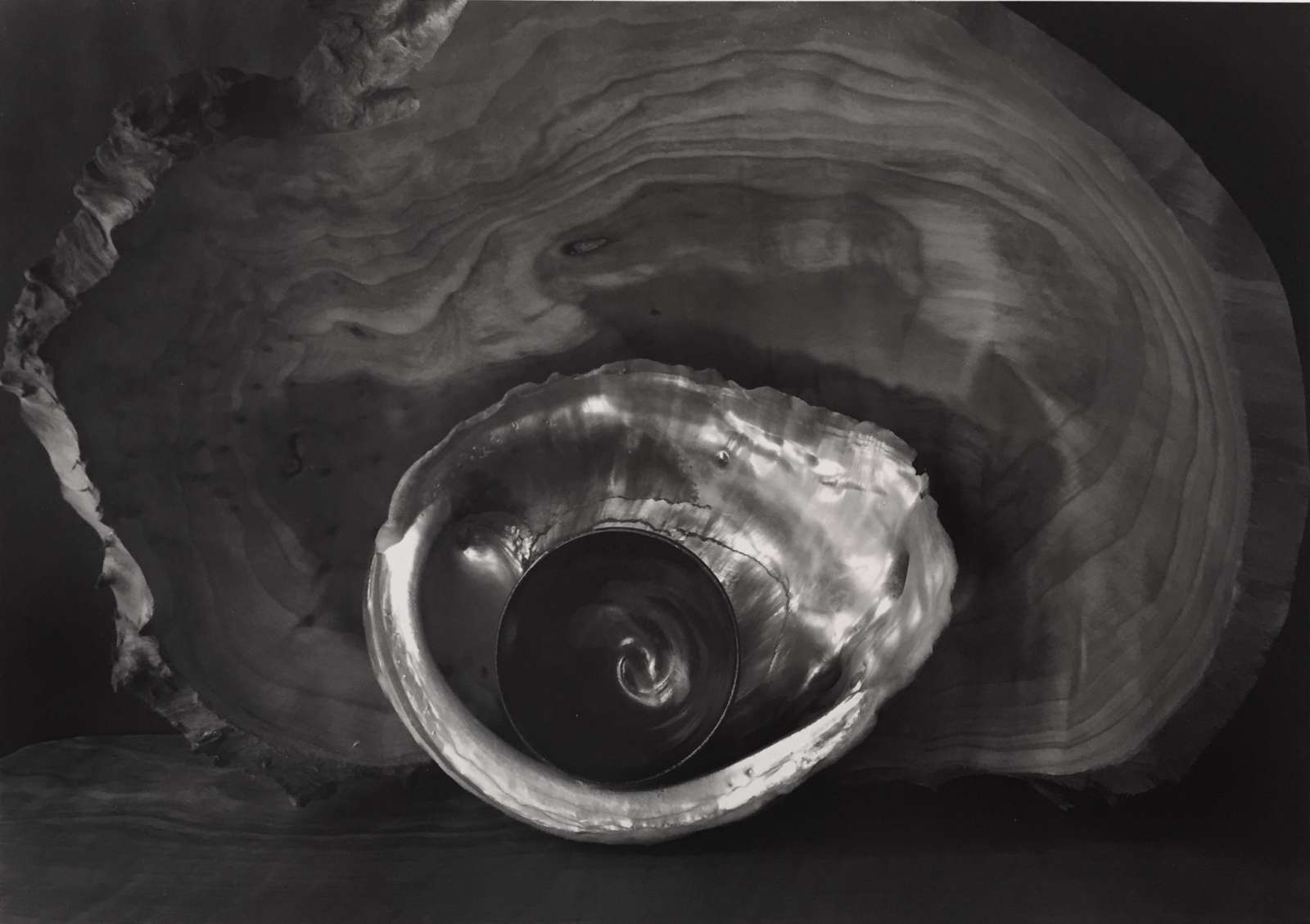 Paul Caponigro, Tea Bowl and Shell, 2002